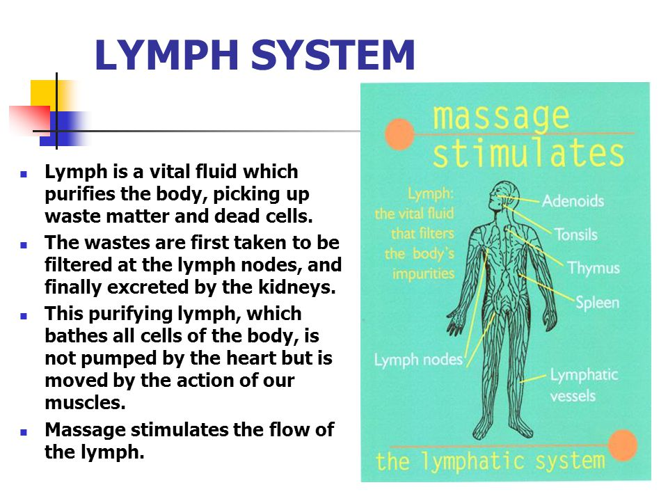 LYMPH SYSTEM Lymph is a vital fluid which purifies the body, picking up waste matter and dead cells.
