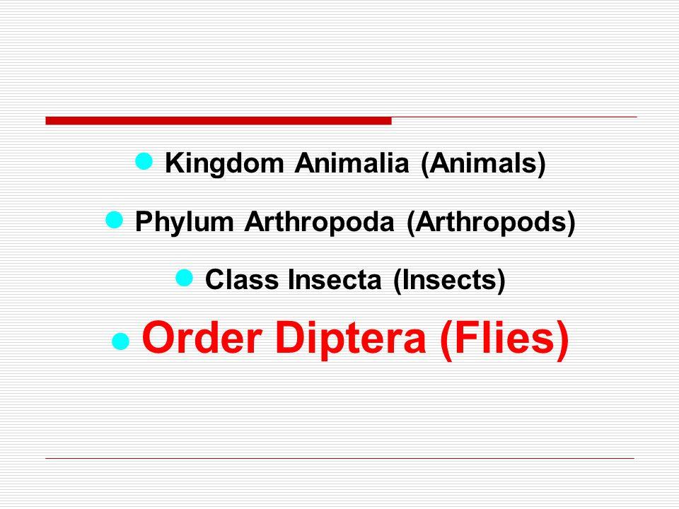 ● Kingdom Animalia (Animals) ● Phylum Arthropoda (Arthropods)