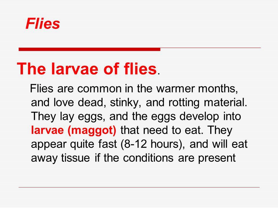 Flies The larvae of flies.