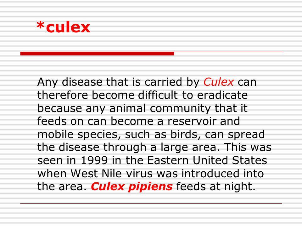 *culex