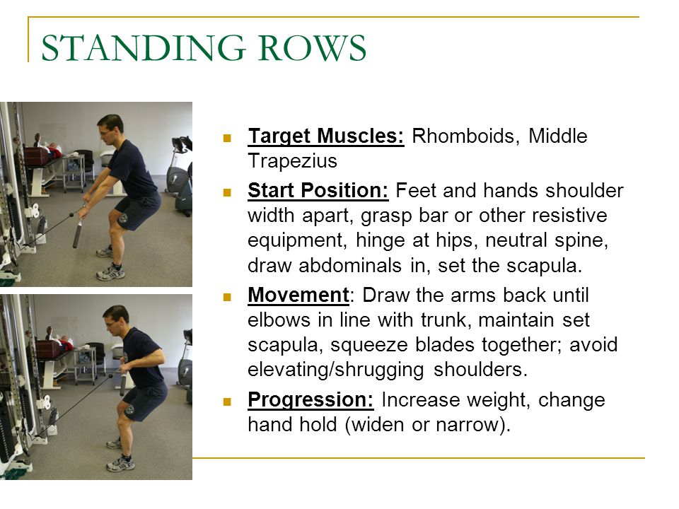 STANDING ROWS Target Muscles: Rhomboids, Middle Trapezius