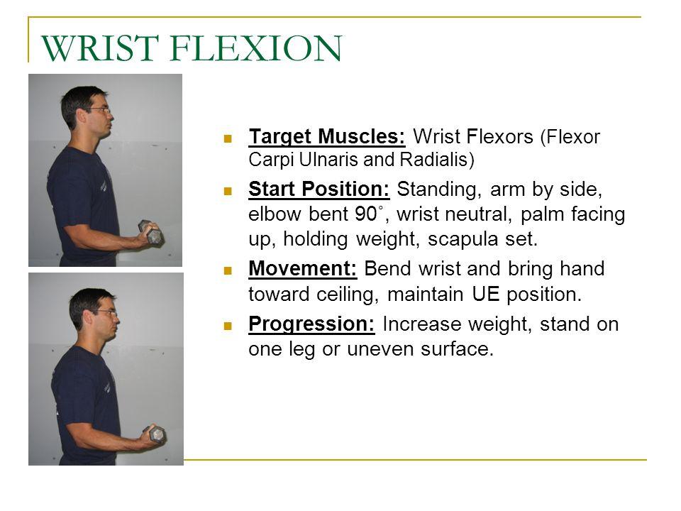 WRIST FLEXION Target Muscles: Wrist Flexors (Flexor Carpi Ulnaris and Radialis)