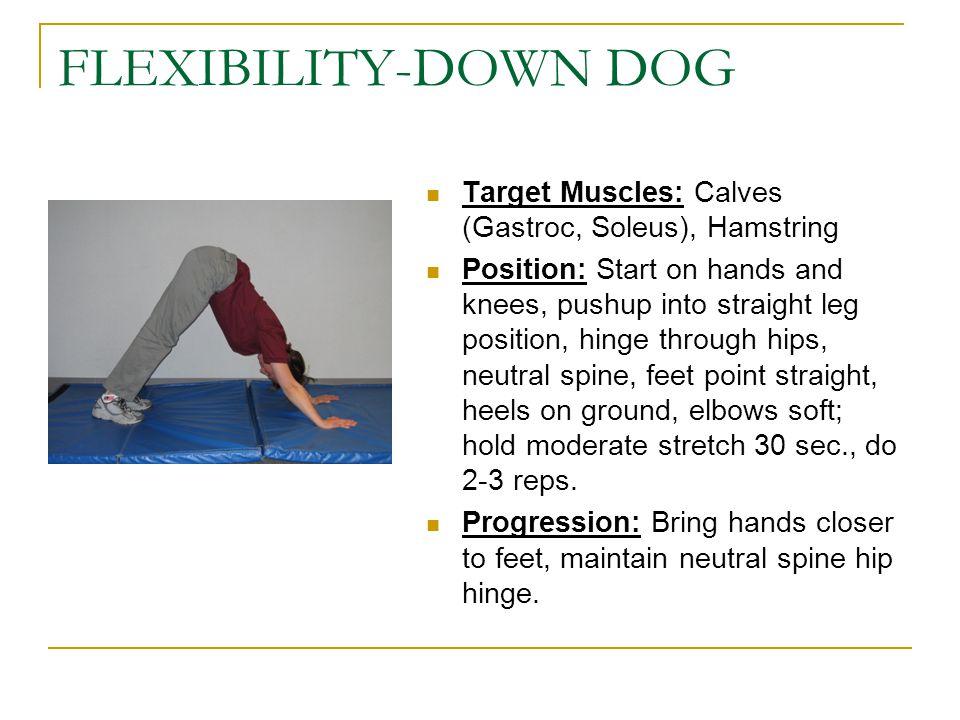 FLEXIBILITY-DOWN DOG Target Muscles: Calves (Gastroc, Soleus), Hamstring.