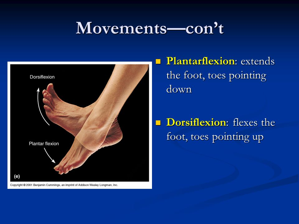 Movements—con't Plantarflexion: extends the foot, toes pointing down