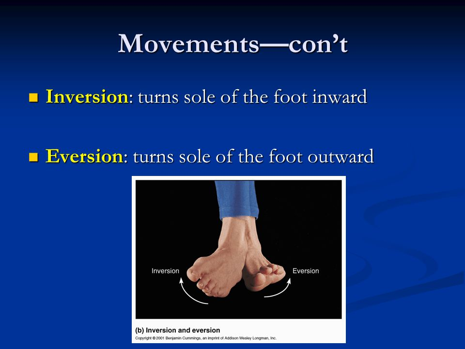 Movements—con't Inversion: turns sole of the foot inward