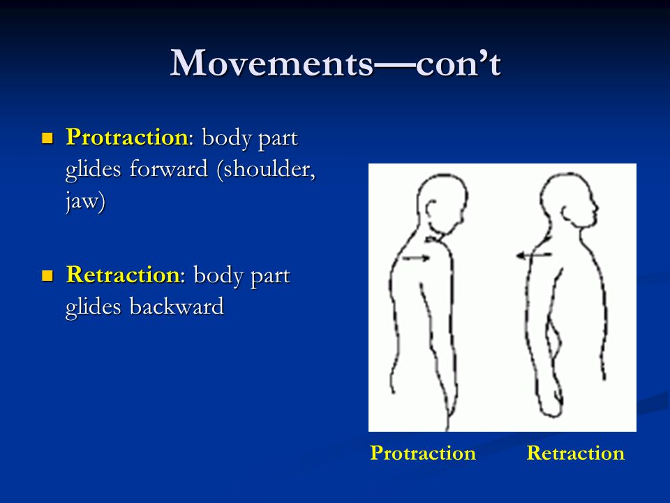 Movements—con't Protraction: body part glides forward (shoulder, jaw)