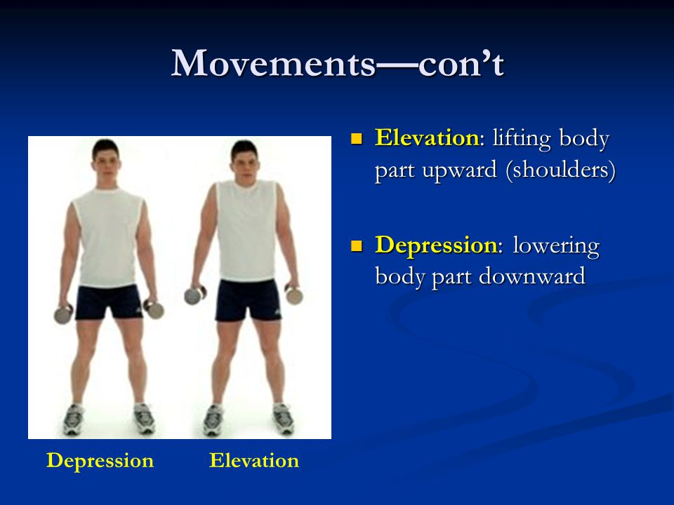 Movements—con't Elevation: lifting body part upward (shoulders)