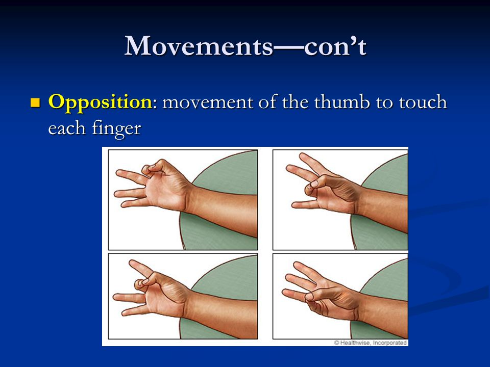 Movements—con't Opposition: movement of the thumb to touch each finger