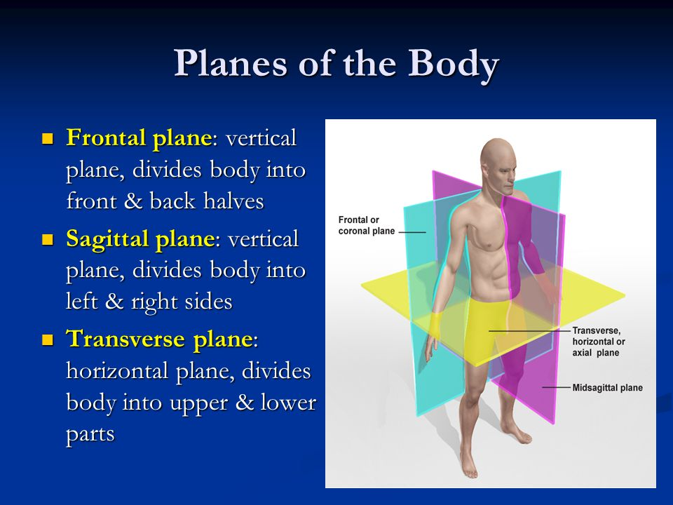 Planes of the Body Frontal plane: vertical plane, divides body into front & back halves.