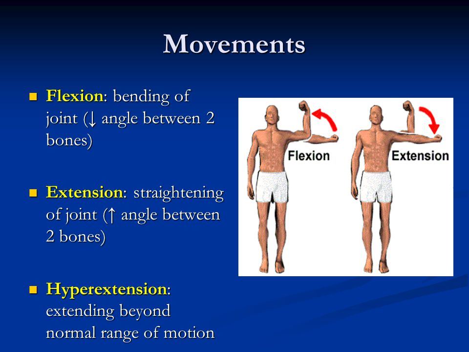 Movements Flexion: bending of joint (↓ angle between 2 bones)