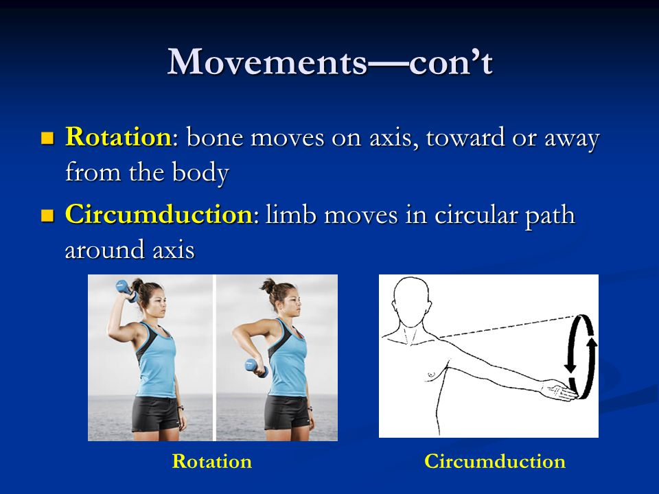 Movements—con't Rotation: bone moves on axis, toward or away from the body. Circumduction: limb moves in circular path around axis.