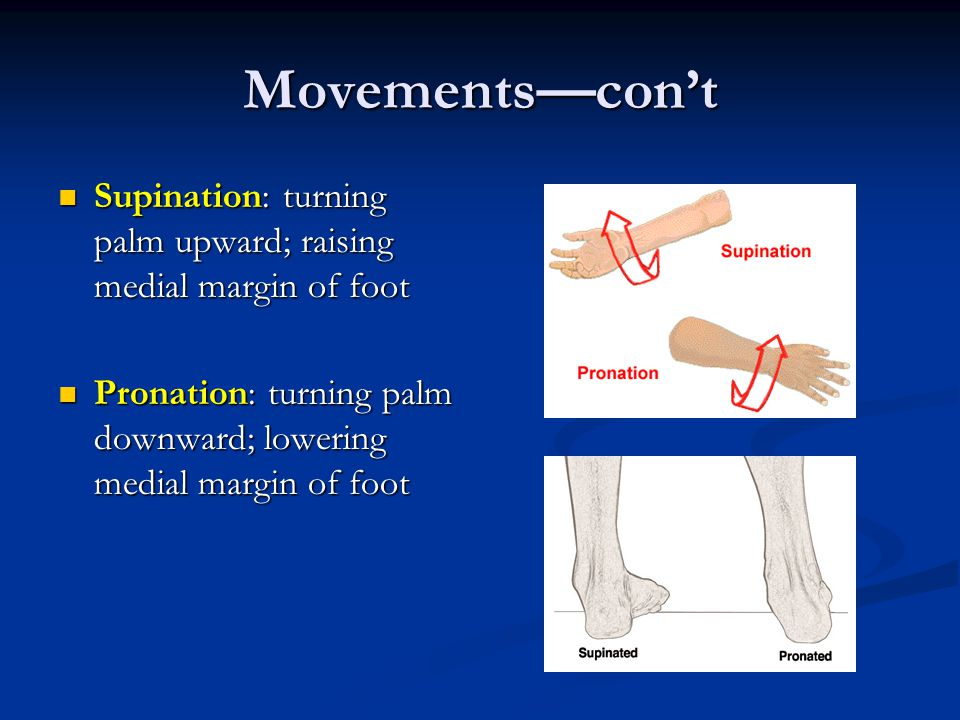 Movements—con't Supination: turning palm upward; raising medial margin of foot.