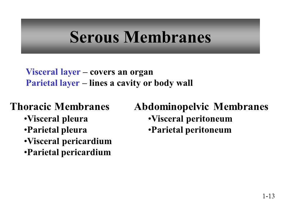Serous Membranes Thoracic Membranes Abdominopelvic Membranes