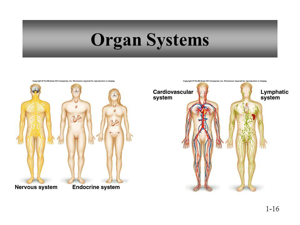 Organ Systems 1-16