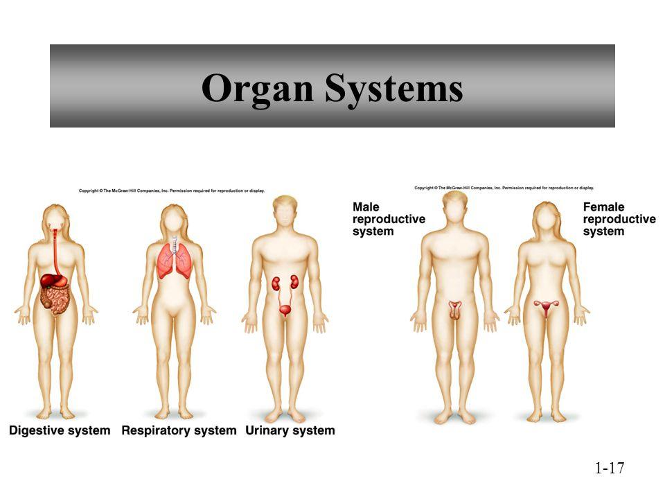 Organ Systems 1-17