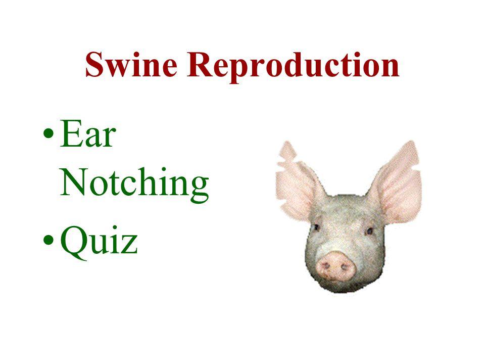 Swine Reproduction Ear Notching Quiz