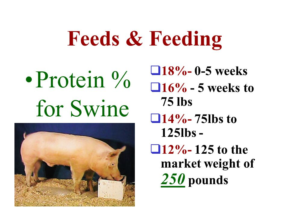 Protein % for Swine Feeds & Feeding 18%- 0-5 weeks