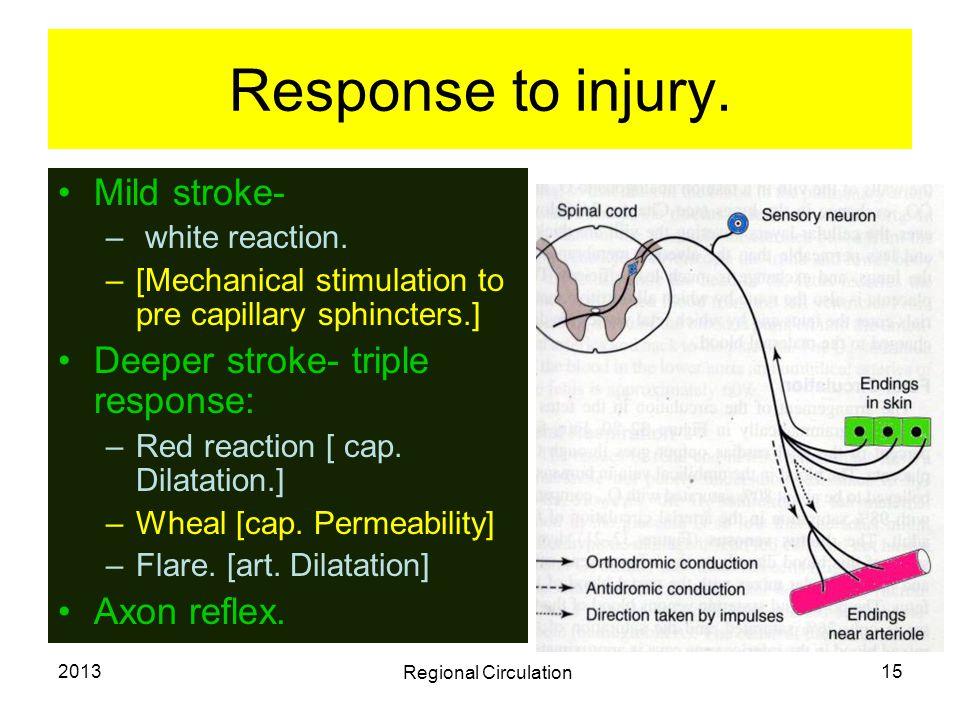 Response to injury. Mild stroke- Deeper stroke- triple response: