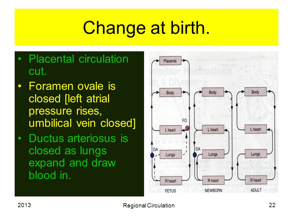 Change at birth. Placental circulation cut.