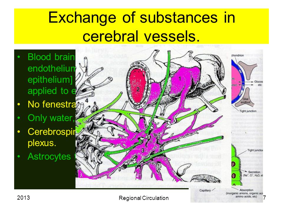 Exchange of substances in cerebral vessels.