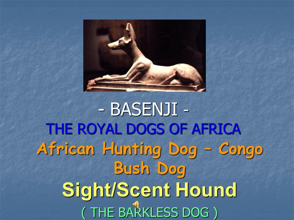BASENJI - THE ROYAL DOGS OF AFRICA
