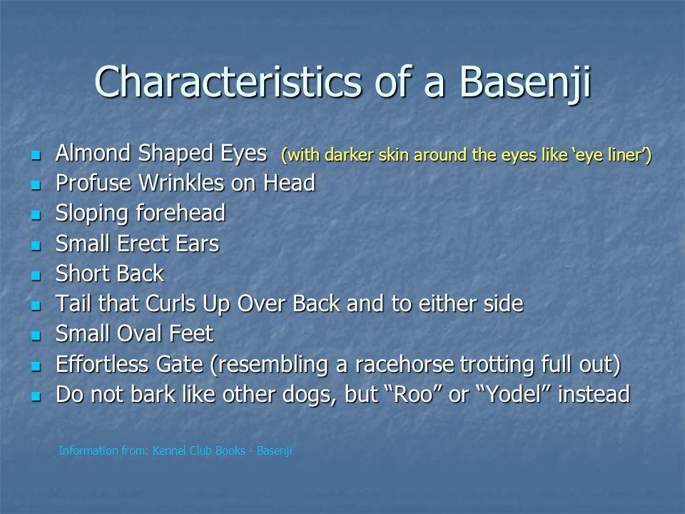 Characteristics of a Basenji