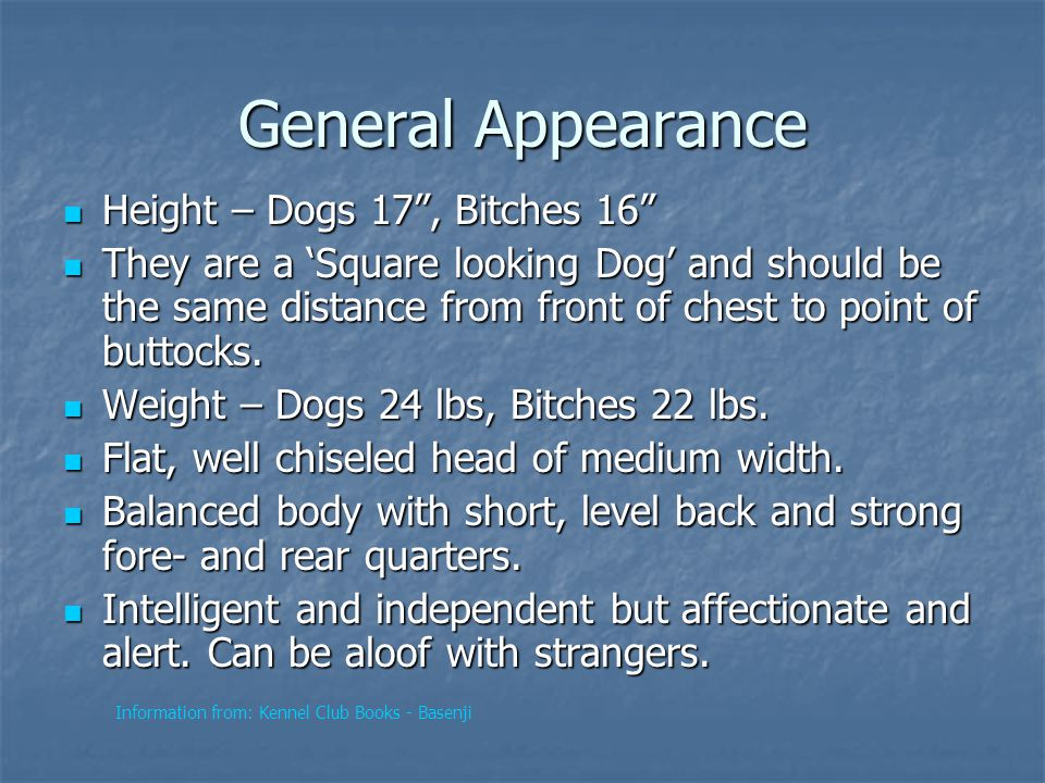 General Appearance Height – Dogs 17 , Bitches 16