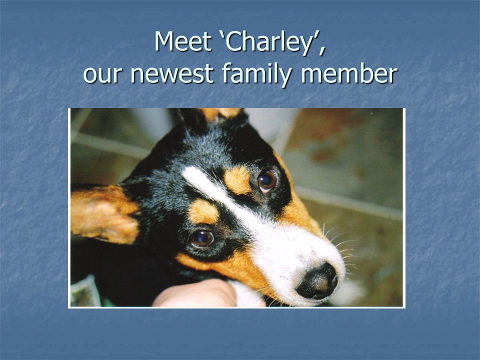 Meet 'Charley', our newest family member