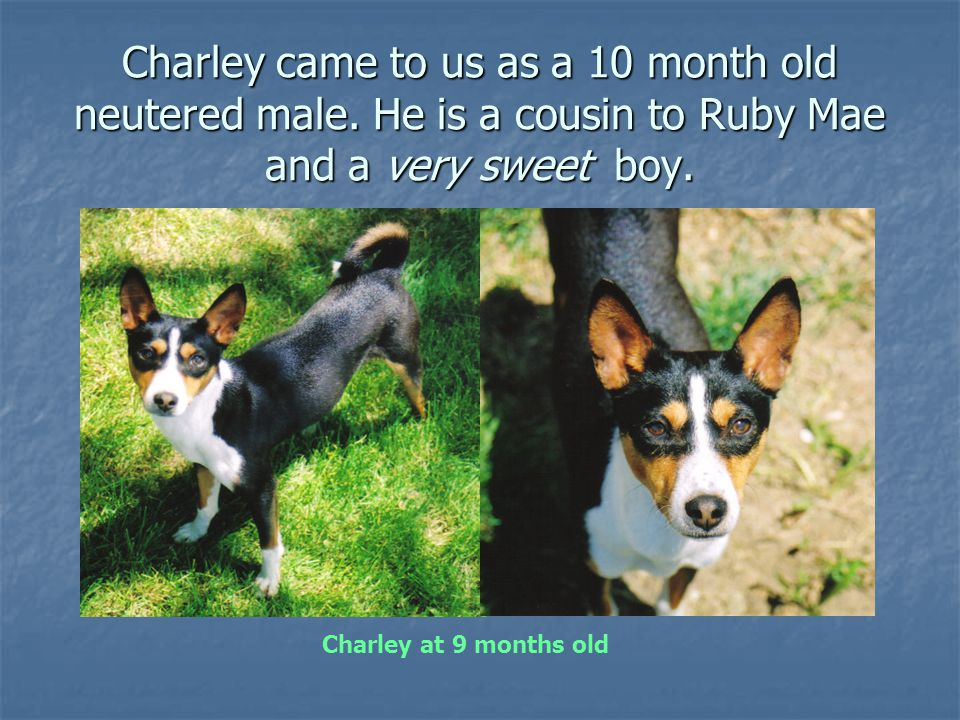 Charley came to us as a 10 month old neutered male