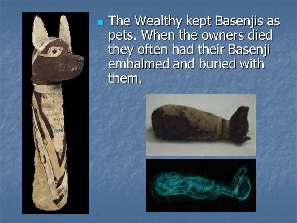 The Wealthy kept Basenjis as pets