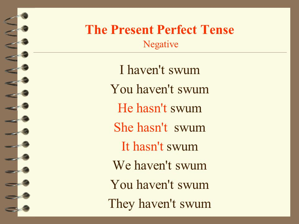 The Present Perfect Tense Negative
