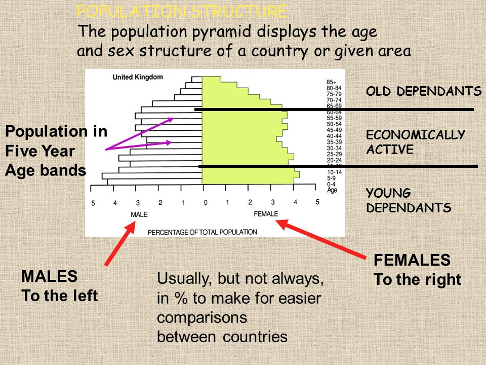 The population pyramid displays the age