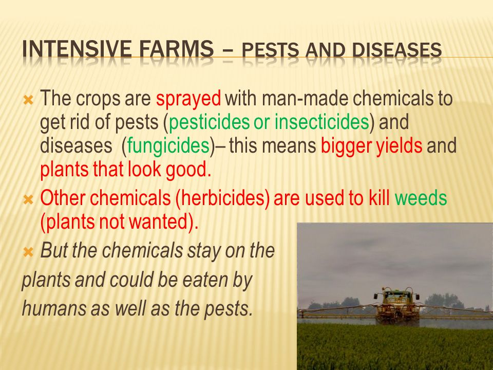 Intensive farms – Pests and Diseases