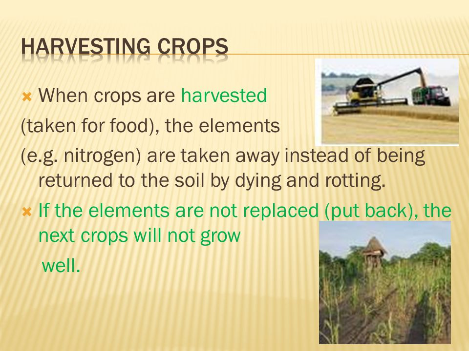 Harvesting crops When crops are harvested