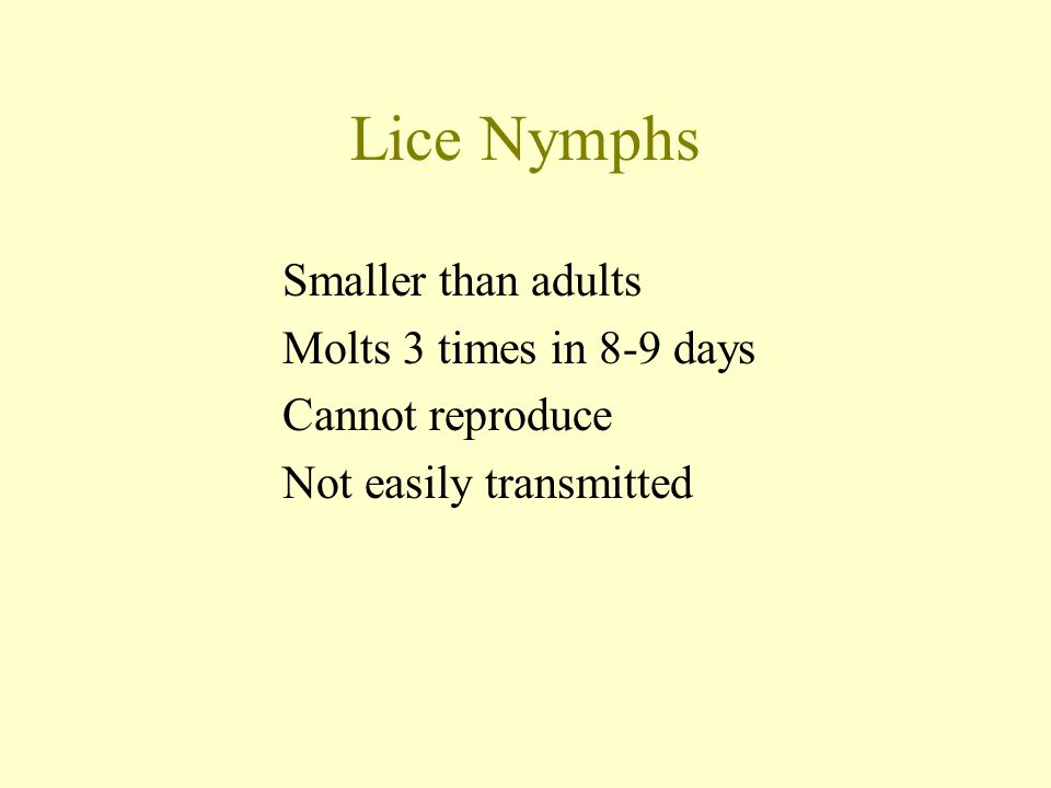 Lice Nymphs Smaller than adults Molts 3 times in 8-9 days