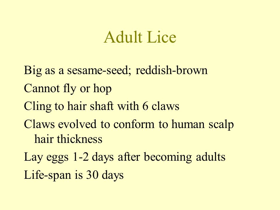 Adult Lice Big as a sesame-seed; reddish-brown Cannot fly or hop