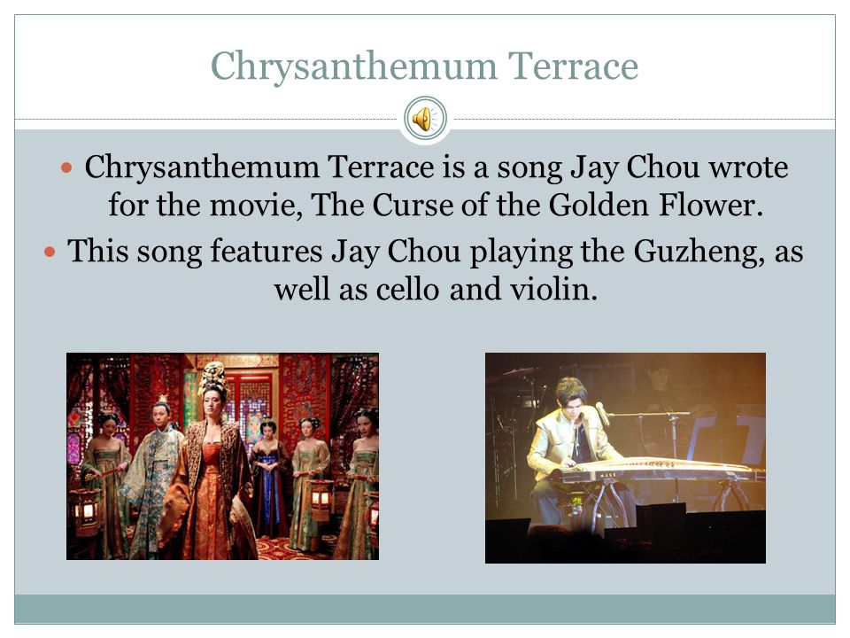Chrysanthemum Terrace