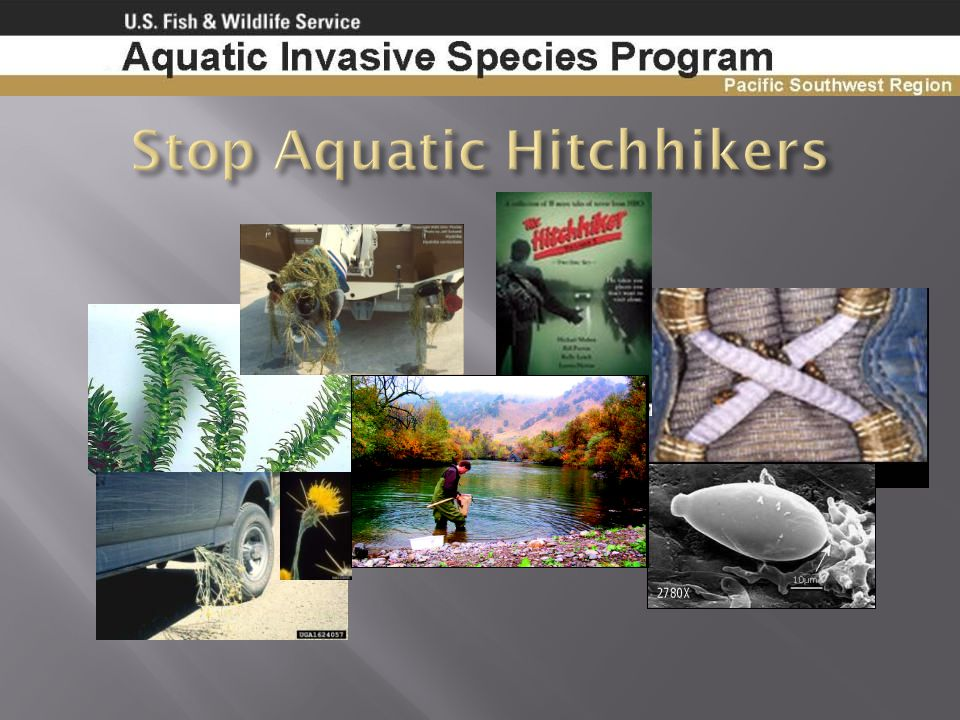 Stop Aquatic Hitchhikers