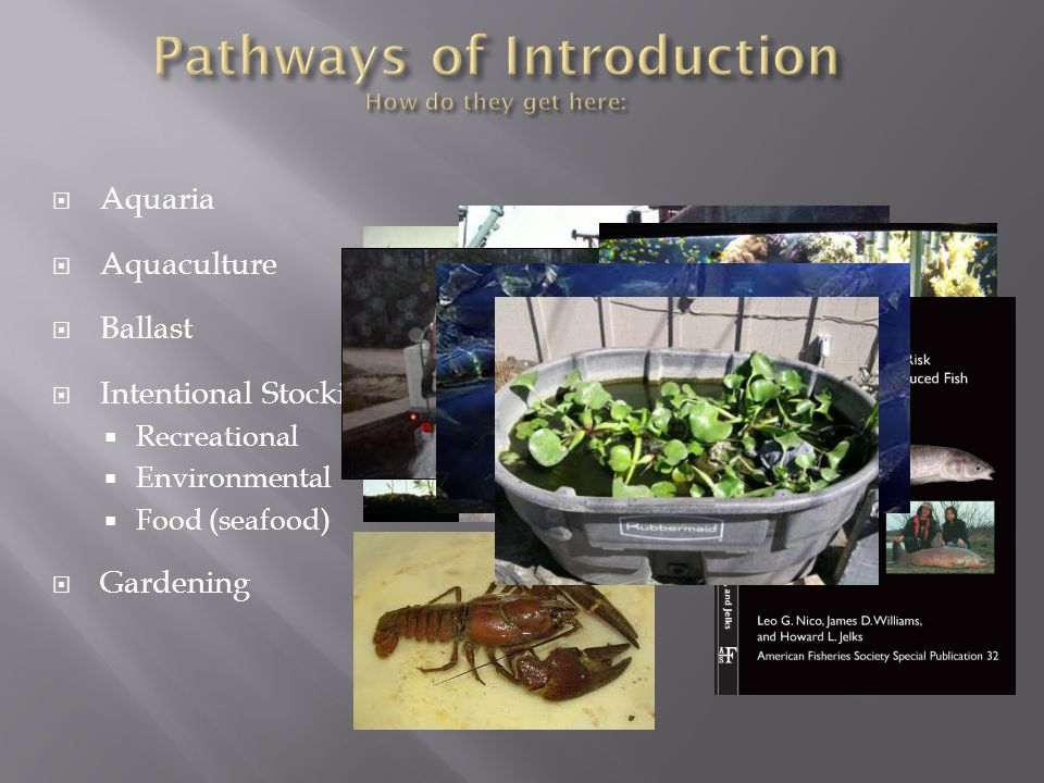 Pathways of Introduction How do they get here: