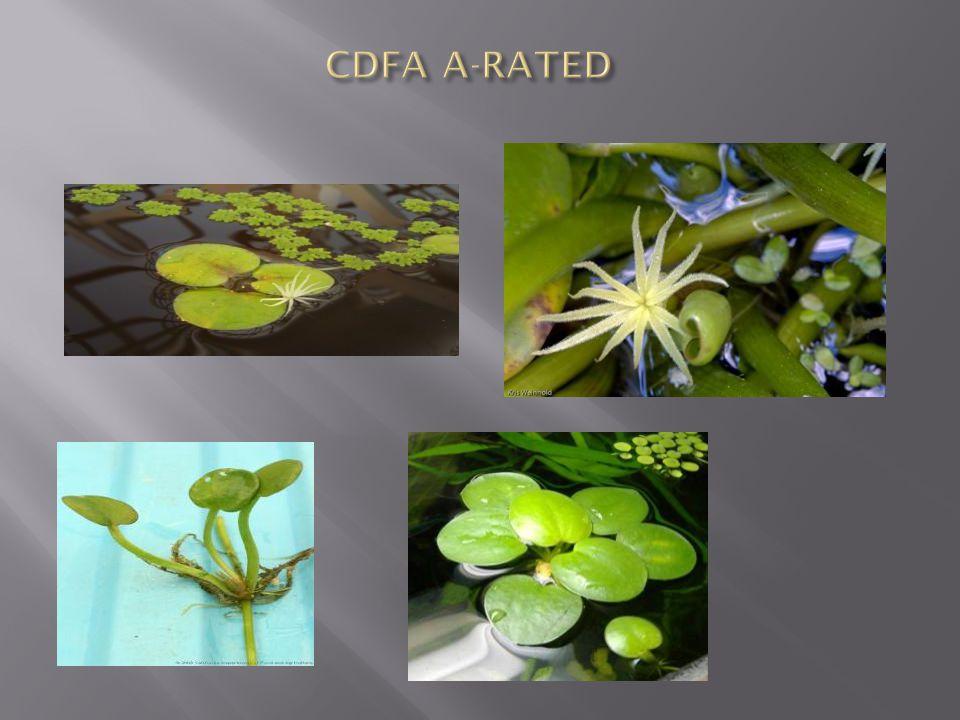 CDFA A-RATED