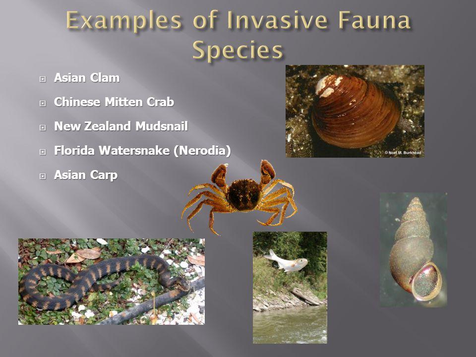 Examples of Invasive Fauna Species
