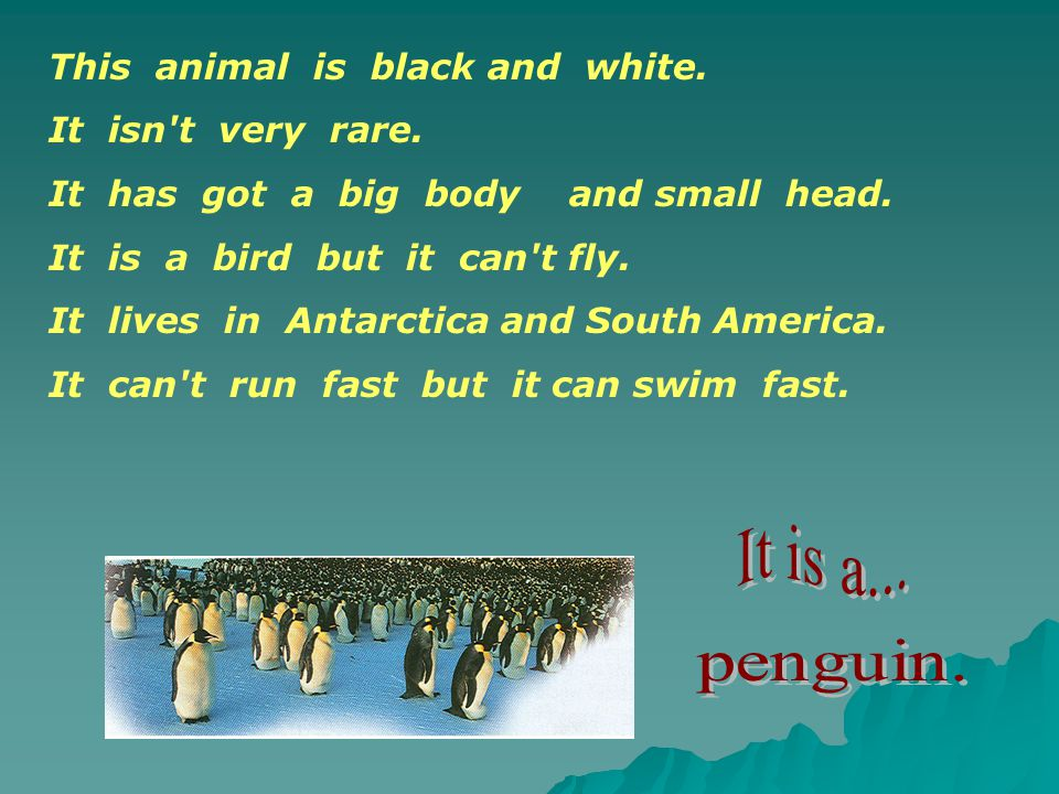 penguin. This animal is black and white. It isn t very rare.
