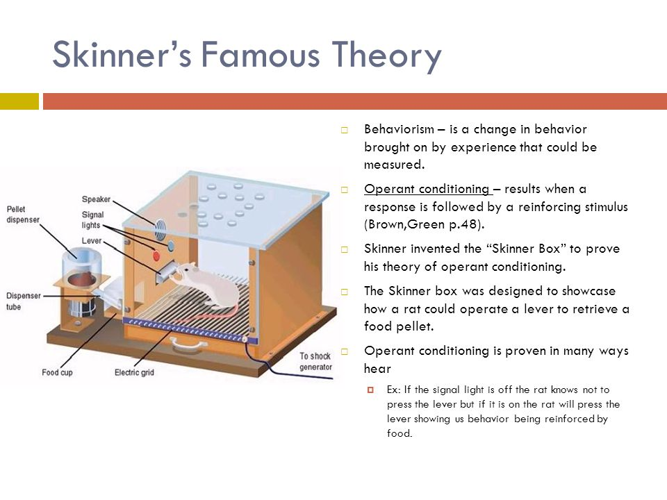 skinners theory Operant conditioning refers to a theory of learning wherein behaviors are learned and refined based on both what occurs before (antecedent) a behavior is emitted by an organism, and what occurs after (consequence) such a behavior.