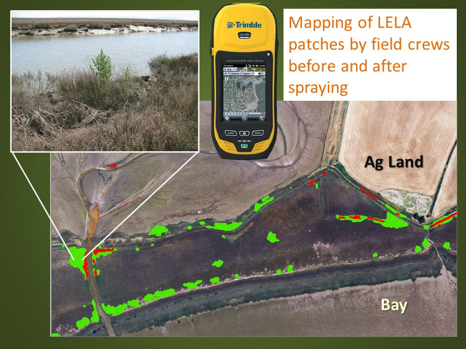 Mapping of LELA patches by field crews before and after spraying