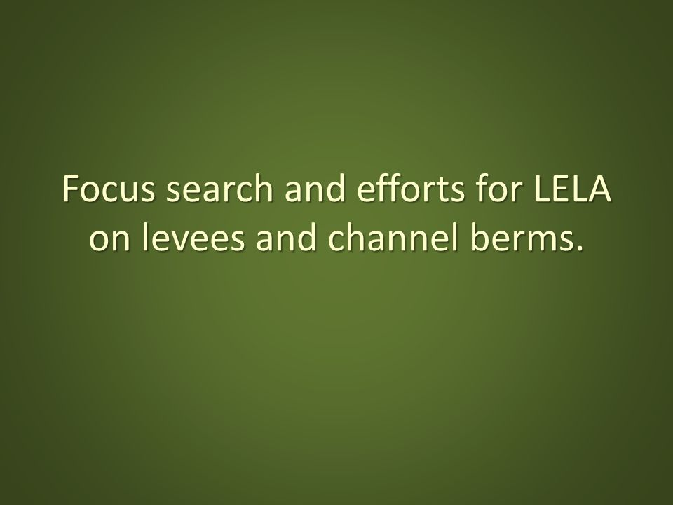 Focus search and efforts for LELA on levees and channel berms.