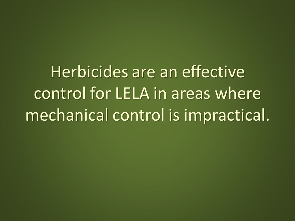 Herbicides are an effective control for LELA in areas where mechanical control is impractical.