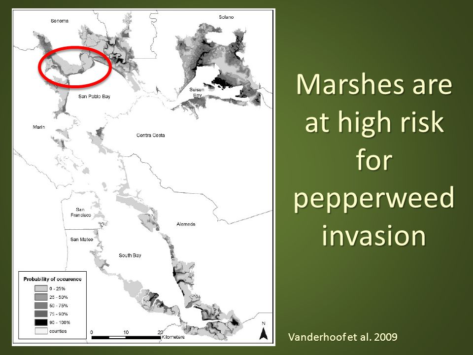 Marshes are at high risk for pepperweed invasion