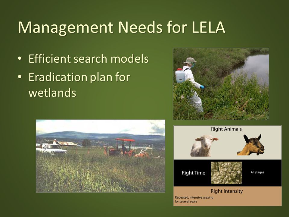 Management Needs for LELA