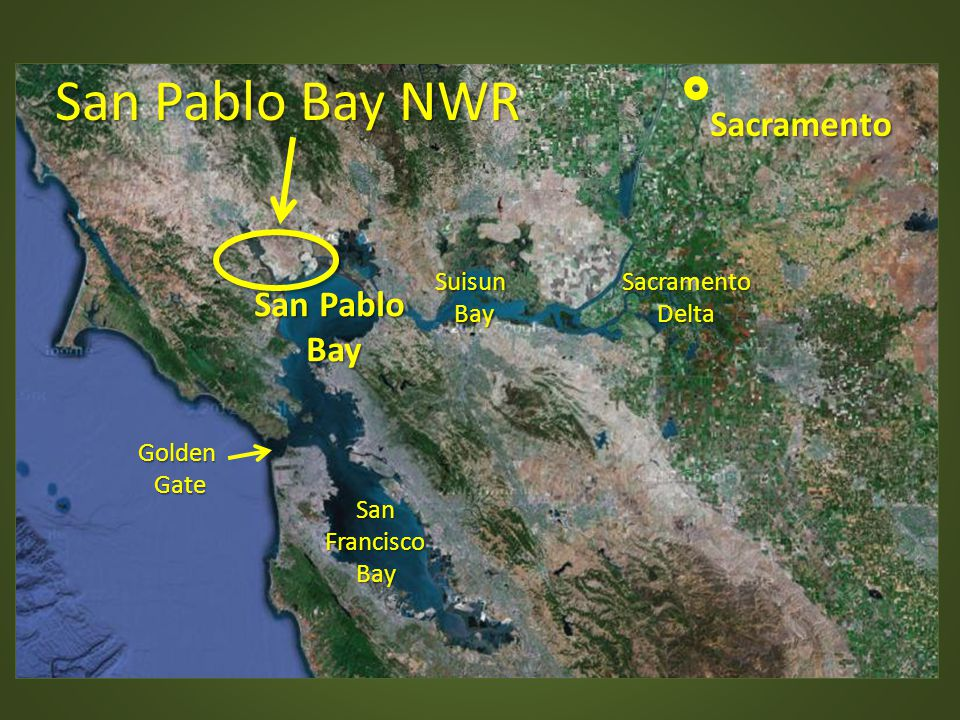San Pablo Bay NWR Sacramento San Pablo Bay Suisun Bay Sacramento Delta
