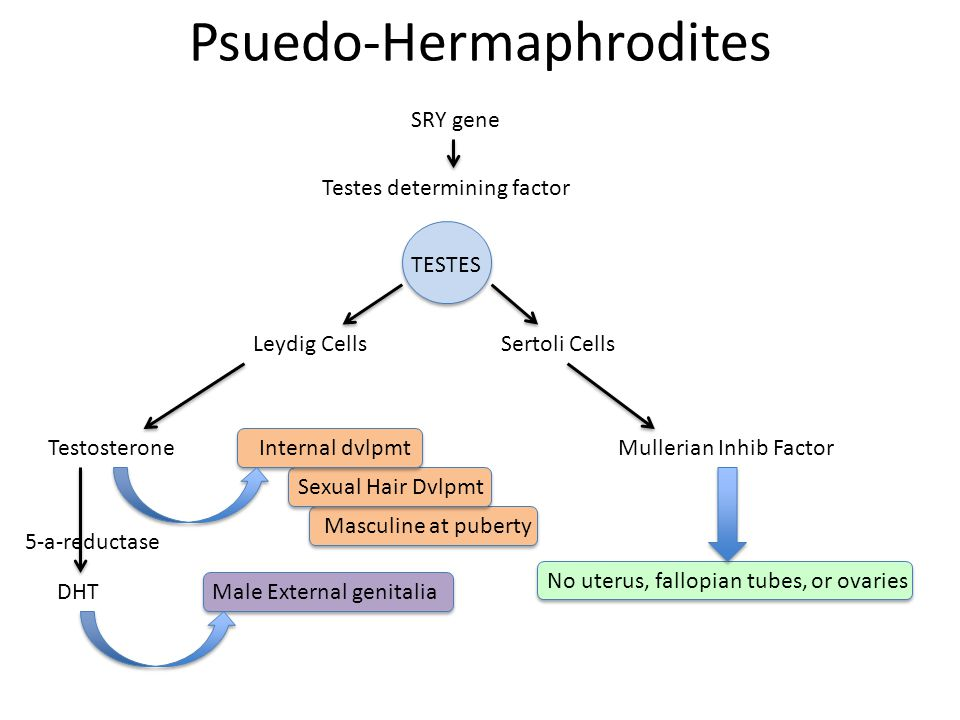 Psuedo-Hermaphrodites